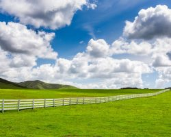Pasture Management – 4 Pasture Care Tips from the Experts
