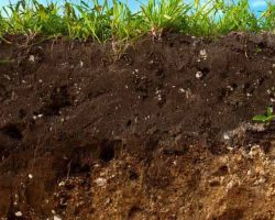How Mulching Improves Soil Structure
