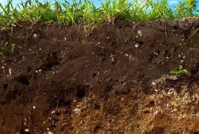 how-mulching-improves-soil-structure-agriculture