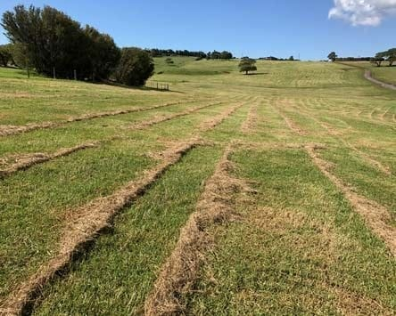 Pasture slashed producing windrows - slashers vs mulshers