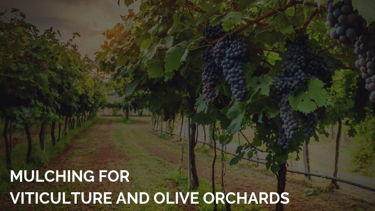 mulching viticulture and olive orchards